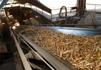 Billets of sugar cane arrive at a sugar mill