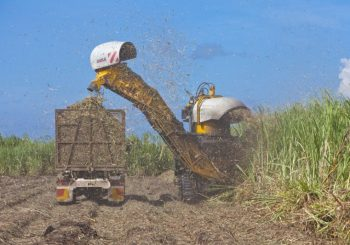 Sugarcane harvest in full swing